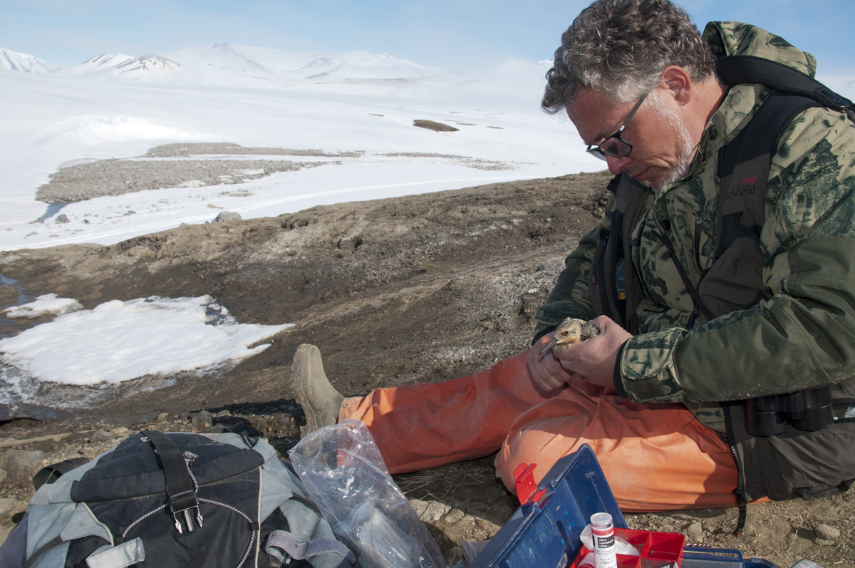 Jannik Hansen ringing a Knot near the sewage of the research station
