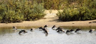 34c dsc_1838 aan de rand van guembeul reserve steekproef voedsel inname frequentie 5 dec 2018